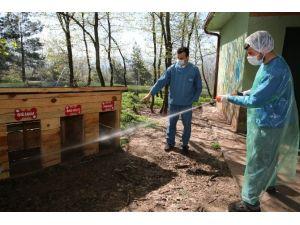 Hayvan Barınağı Her Hafta Dezenfekte Ediliyor