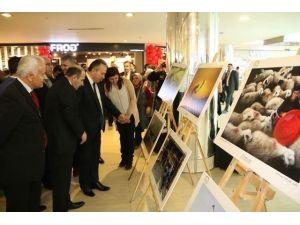 Vali Fidan Fotoğraf Ve Resim Sergisi Açtı