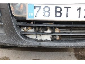 Karabük'te Kedi Kurtarma Operasyonu