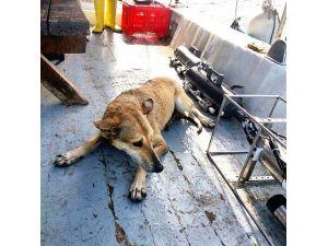 Bilimsel araştırma için açıldıkları denizde köpek kurtardılar