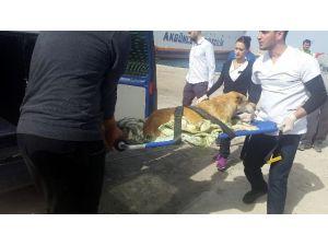 Denizde Boğulmak Üzere Olan Köpeği, Girne Üniversitesi Akademisyenleri Kurtardı