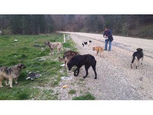 Orhaneli Yolundaki Köpeklere Sürücüler Sahip Çıkıyor