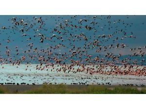 Su Kuşu Sayımları Tamamlandı