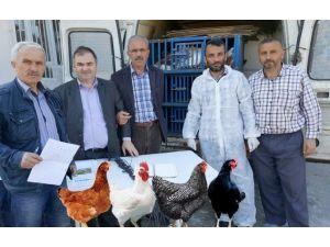 Tarım Kredi'den Köylüye Tavuk