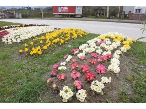 Bahar Çiçekleri Rengarenk