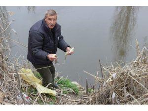 Porsuk'ta Ölü Balıklar Su Yüzüne Vurdu