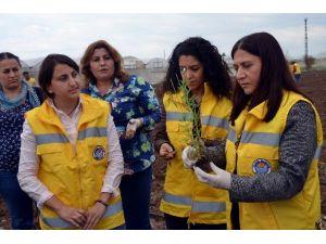 Akdeniz Belediyesi Çiftçiler İçin Harekete Geçerek Lavanta Dikti