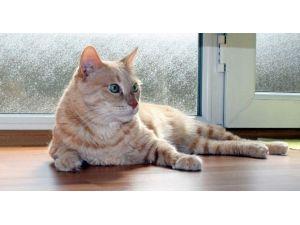 Kediye Tahliye Davasında Davacı Aile Konuştu