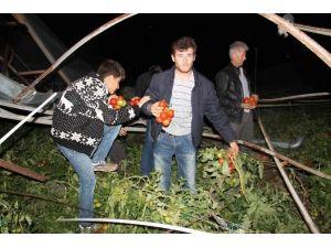 Muğla'da Hortum Seraları Yıktı