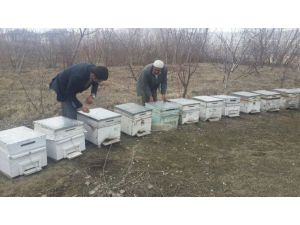Van'da Arılar Kış Uykusundan Uyandı