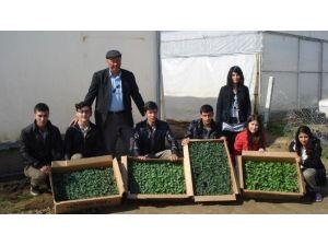 Sarıgöl'de Lise Öğrencileri Organik Tarıma Başladı
