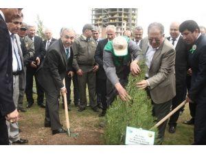Adana'da Her Yıl 3.5 Milyon Fidan Toprakla Buluşuyor