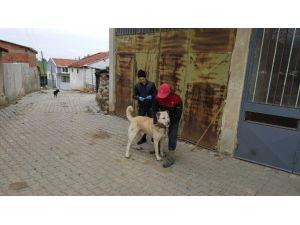 Malkara'da Kedi Ve Köpeklere Kuduz Aşısı Kampanyası