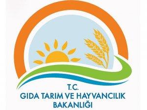 Gıda, Tarım ve Hayvancılık Bakanlığı bin 677 personel alacak