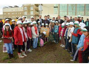 Niksar Devlet Hastanesi Çevresi Ağaçlandırıldı