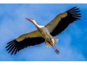 Kuş Cenneti Baharda Başka Güzel