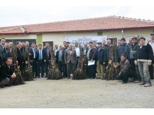 Hisarcık'ta 36 Çiftçiye Ceviz Fidanı Desteği