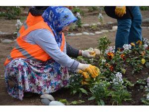 Görele Belediyesi Rengarenk Çiçekleri Toprakla Buluşturuyor