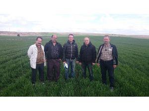 Buğday Çiftçilerine Modern Gübreleme Anlatıldı