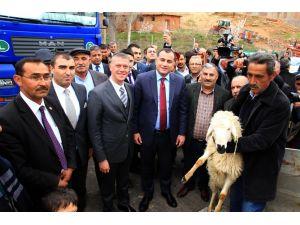 Çankaya Belediyesi, köylülelere koyun ve koç dağıttı