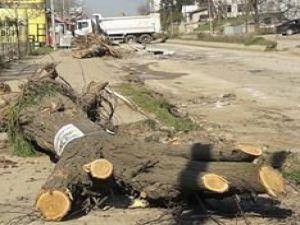 TEMA, Ağaç Kesimine Tepki Gösterdi