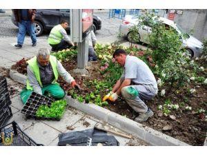 (Düzeltme) 50 Bin Çiçek Ekimi Çalışmaları Başladı