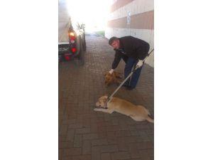 Zabıta Ekipleri 261 Sokak Hayvanına Sahip Çıktı