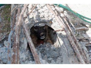 Çorum'da Köpek Kurtarma Operasyonu