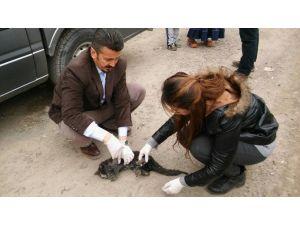 Hakkari'de Yaralı Kediye Şefkat Eli