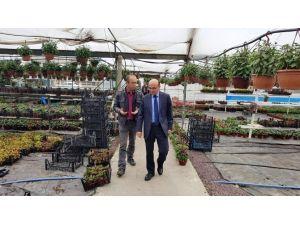 Başkan Oral'dan Çiçek Üreticilerine Ziyaret