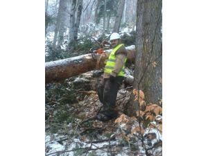 Traktörün Altında Kalan Orman İşçisi Hayatını Kaybetti