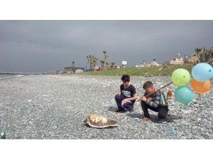 Dörtyol Sahilinde 6 Deniz Kaplumbağası Ölü Bulundu