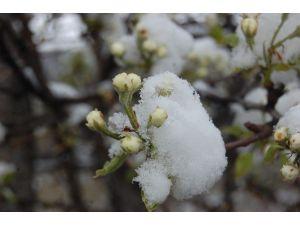 Tokat'ta Çiçek Açan Meyve Ağaçları Kar Altına Kaldı