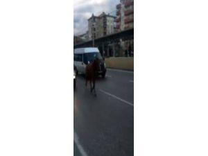 Bursa'da Otoyola Çıkan AT Vatandaşları Şaşırttı