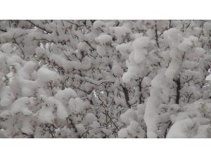 Erken çiçek açan meyve ağaçlarını 'don' vurdu