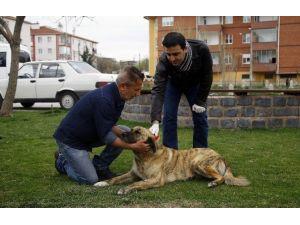 Odunpazarı'ndan Hayvanlara Aşı Uygulaması Devam Ediyor