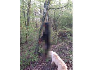 Hendek'te sokak köpeğini ağaca astılar