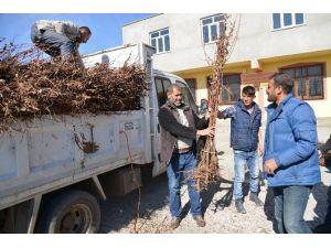 Diyarbakır'da 15 Bin Haneye 30 Bin Meyve Fidanı Dağıtıldı