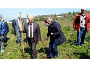 Lapseki'de 4 Bin Fıstık Çamı Dikildi