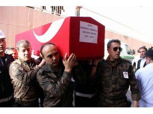 Şehit Sezgin'in Cenazesi Memleketine Getirildi