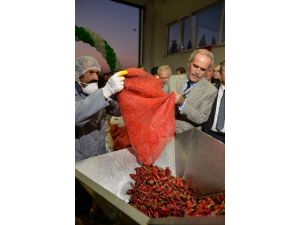 Besaş'tan Tüketiciye Kırmızı Toz Biber