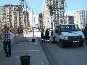 Tecde Mahallesi'nde Ağaçlandırma Çalışması Başladı