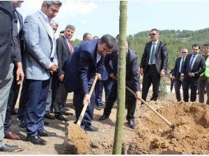 Kalkınma Bakanı Cevdet Yılmaz Ağaç Dikti