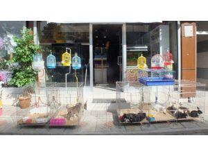 Van'da Petshoplara İlgi Artıyor
