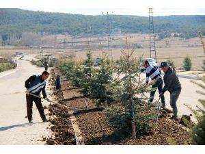 Akdağmadeni Belediyesi Yeşillendirme Çalışmalarını Aralıksız Sürdürüyor