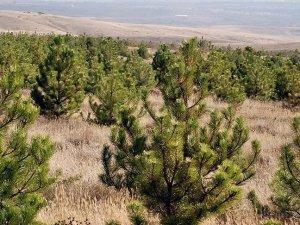 Türkiye'de orman varlığı 22,3 milyon hektar alana yükseldi