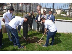 Fatsa'da Kyk Öğrencileri Fidan Dikti