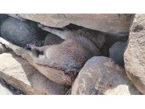 Taşların Arasında Mahsur Kalan Sıpa Kurtarıldı