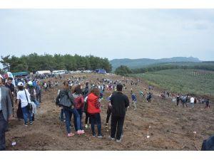 Bursa'da Geçen Yaz Kül Olan 170 Hektar Alan Ağaçlandırıldı