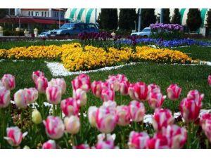 Ortaca, Dalaman Ve Köyceğiz'de Çiçek Üretimi 3 Milyona Ulaştı